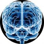 ¿En qué parte del cerebro se origina el amor?