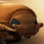 Algunos insectos disponen de la habilidad para contar
