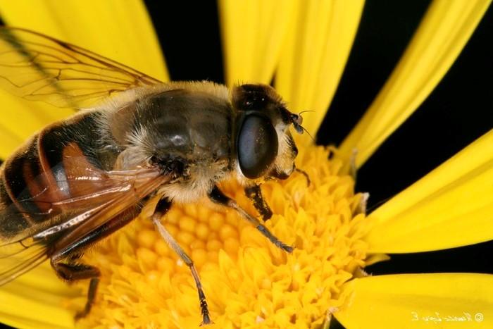 Abejas necesarias para producir un kilo de miel