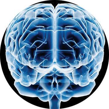 cerebro amor