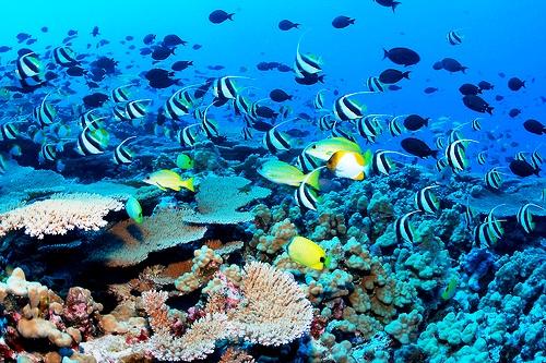 Fondo marino Google Maps
