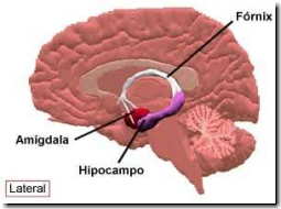 Disfunciones en el hipocampo provocarían las deficiencias en el ...