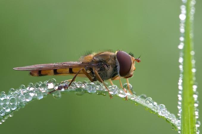 alas insectos