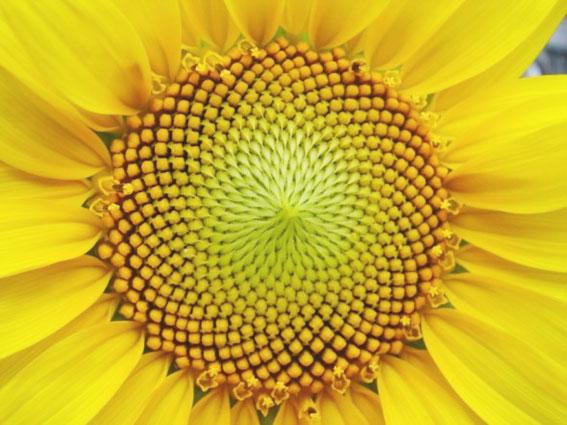 sucesion_fibonacci